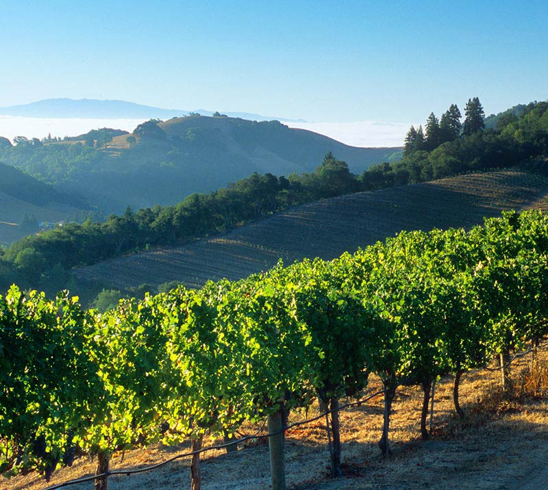Napa Valley Wineries at California